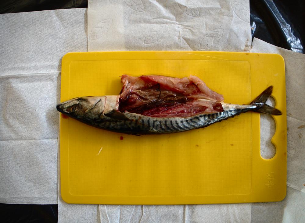 Kat Austen / Gjino Šutić – Sushi Roulette: Neue Plastikschadstoffe  Kat Austen und Gjino Šutić, Sushi Roulette Workshop, Piksel Festival, Bergen, Norwegen, 2015, Foto: Kat Austen